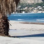 sun, palm trees, a beach and the sea