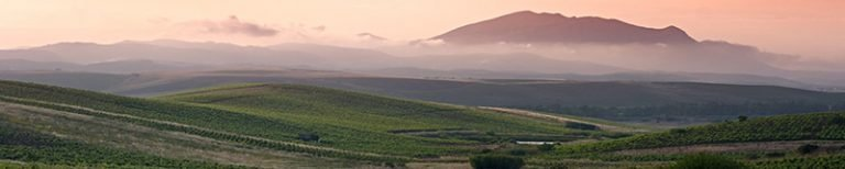 Evening setting over a sloping Sicilian vineyard