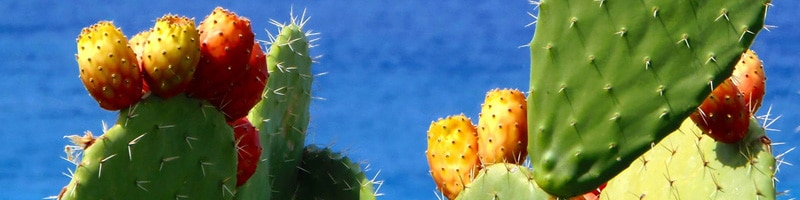 prickly pears, fichi d'india