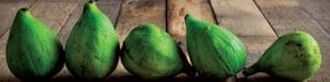 featured image for five things about figs