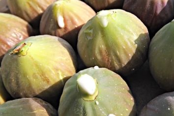 milky substance on figs