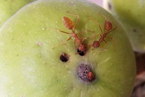 fig and wasp live in mutuality