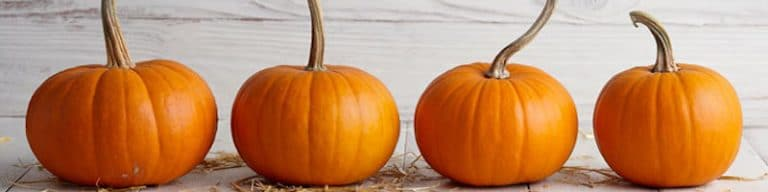 feature pumpkin image