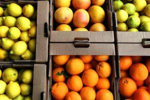 a mix of citrus fruit