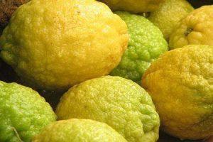 big citrus, the Sicilian citron
