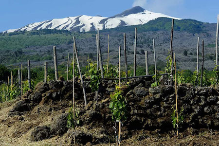 red and white wine in mount Etna