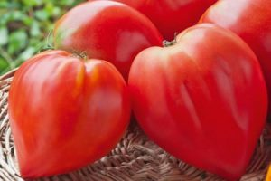 toothsome tomato
