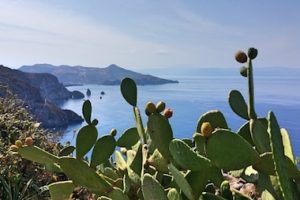 prickly pears are emblematic for Sicily