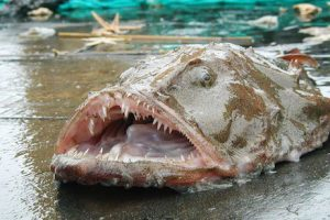 monkfish blues