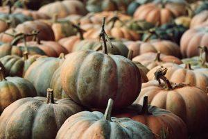 autumn recipes: risotto con zucca